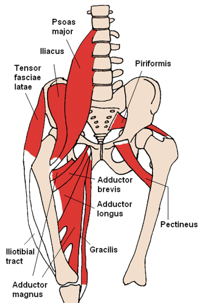 hip_flexor_muscles