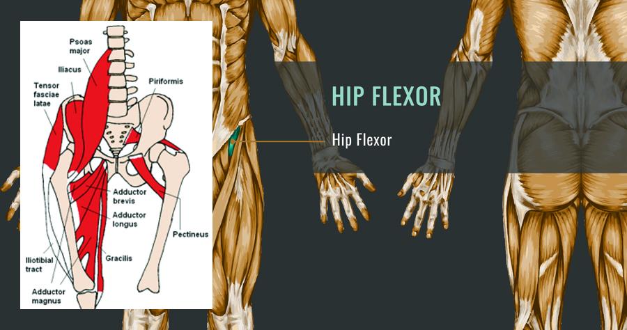 Foam Roller Hip Flexor Exercises Video Improve Hip Flexibility Today